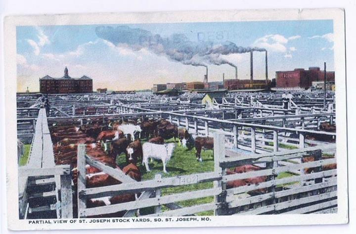 St. Joseph Mo Stock Yards Postcard to here next