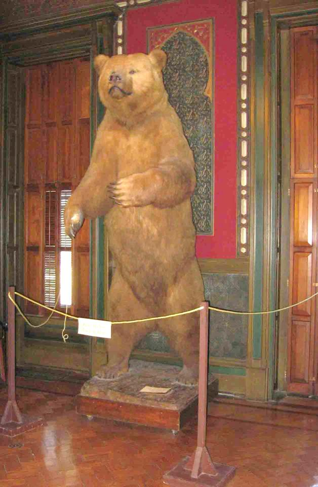 Dugdale Bear at St. Joe Museum