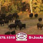 Buy Cattle Feed St. Joseph Missouri – St. Joseph Agri Services