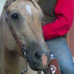 Pony Express Reride Returns.